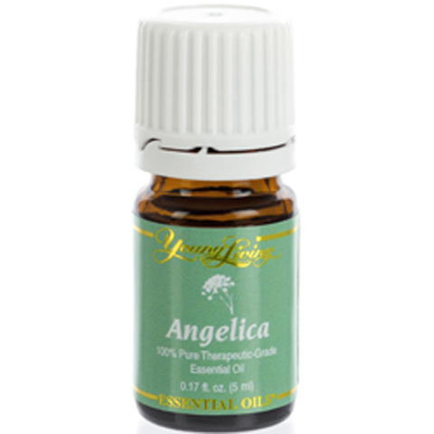 Angelica Essential Oil - 5ml Image